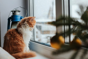 A fluffy red kitten sits on a windowsill and looks out the window. A kitten watches the falling...