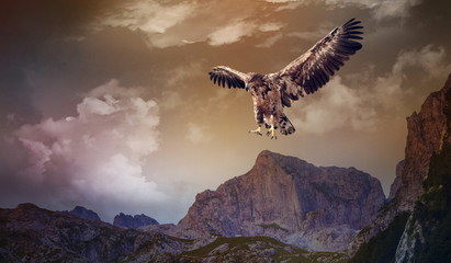 Photo sur Plexiglas Aigle eagle flying over the dark mountains