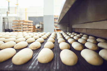 In de dag Bakkerij Automatic bakery production line with bread in bakery factory