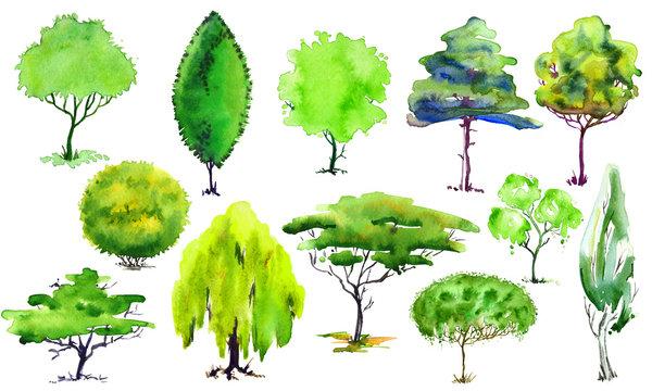 Set decorative green trees,willow,spruce,cypress,poplar.Hand drawn. Watercolor illustration