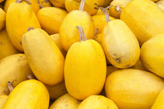 Close up on pile of spaghetti squash freshly picked from the field.This oval yellow squash contains a surprise: a stringy flesh that, when cooked, separates into mild-tasting, spaghetti-like strands.