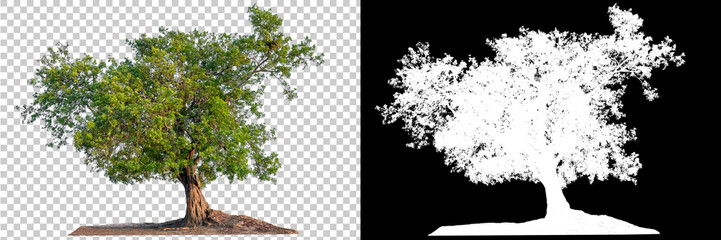 Isolated single tree with clipping path and alpha channel on a transparent picture background. Big tree large image is easy to use and suitable for all types of art work and print. Papier Peint