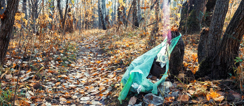 Garbage in the forest on fallen leaves. Environmental contamination. Purity of nature.