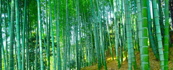 Spoed Fotobehang Bamboe 静かな竹林の山