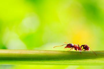 macro photographed ant image