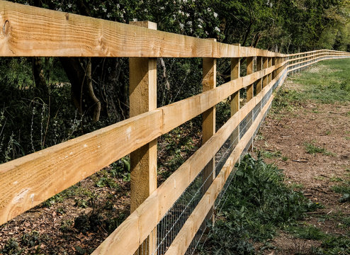 Newly installed timber fencing seen at the perimeter to a large grazing field, at the edge of a forest in midd summer.