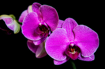 Tuinposter Orchidee pink flowers