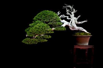 Tuinposter Bonsai Bonsai 4