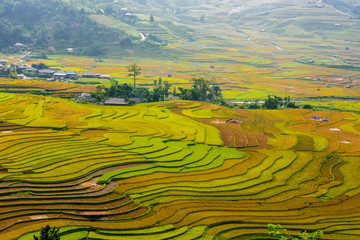 Garden Poster Rice fields colorful rice terraces, you will feel small by its immensity and peaceful when discovery at west north area in vietnam
