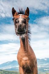 Funny Face Horse Head Portrait. Unique Perspective