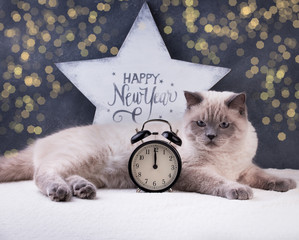 Papiers peints Chat Cat. Christmas party, winter holidays cat with new year symbols. New year cat.