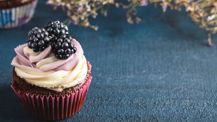 Delicious cupcake with blackberry. Copy space