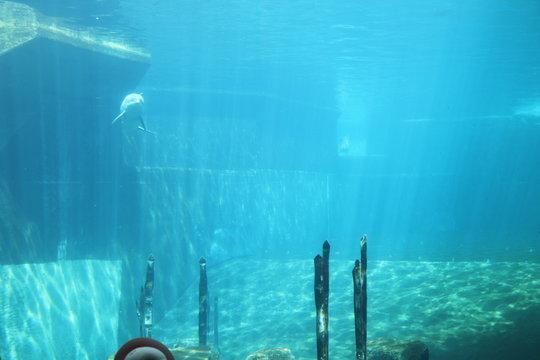 Golfinhos em aquário sem edição