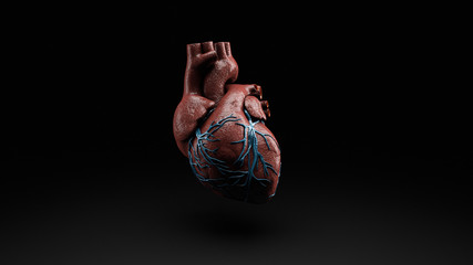 Anatomy of Human Heart Isolated on black, 3d Rendering