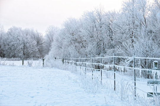 Ice Storm in Rural Indiana