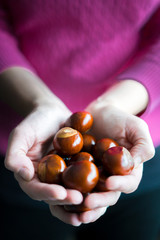 Woman's hand holding autumn conkers