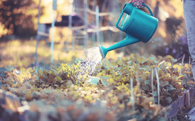 Man farmer watering a vegetable garden Fototapete