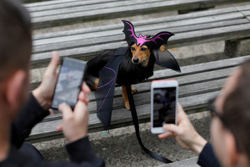 People photograph Dita the Doxle dog, dressed as a bat, at the Tompkins Square Halloween Dog Parade in Manhattan, New York City