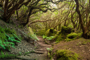 The path of the enchanted forest Park of Anaga, tenerife island