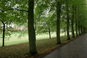 Avenue of trees in Cambridge