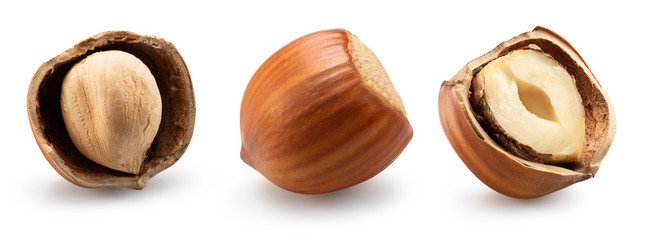 collection of hazelnuts in shell isolated on a white background