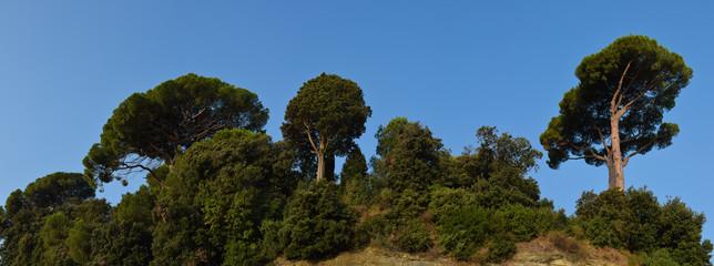 Fototapete - Macchia mediterranea