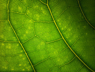 Printed kitchen splashbacks Macro photography Green leaf macro background. Beautiful nature backdrop. Close up of textured. Environment and ecology concept, space for your design