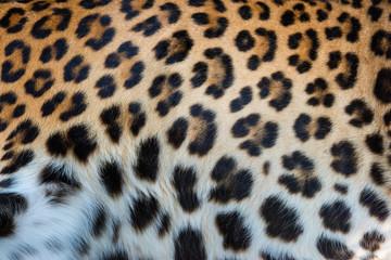 Fototapete - Real skin texture of Leopard