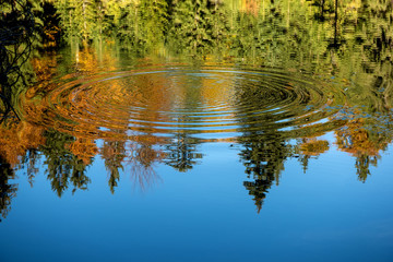 Reflection of the autumn forest in the mirror of the lake