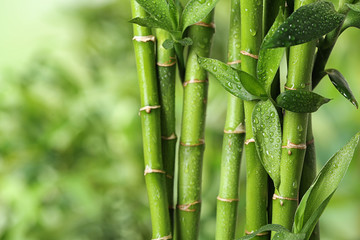 Foto op Canvas Bamboo Beautiful green bamboo stems on blurred background