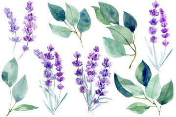 lavender flowers and blue leaves  eucalyptus on an isolated white background, clipart watercolor painting, hand drawing