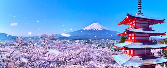 Spoed Fotobehang Blauwe hemel 桜吹雪舞う新倉山浅間公園内の五重塔と富士山