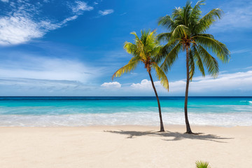 Spoed Fotobehang Strand Tropical white sand beach with coco palms and the turquoise sea on Caribbean island.