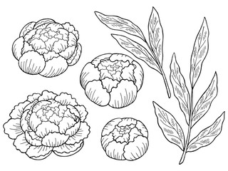 Peony flower graphic black white isolated sketch set illustration vector