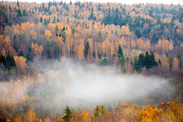 Fog moving above forest in autumn, beautiful nature