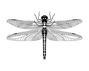 Black vector dragonfly icon isolated on white background,