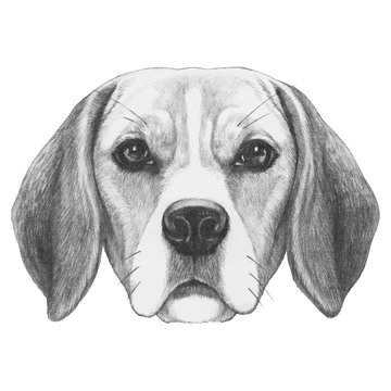 Portrait of Beagle. Hand-drawn illustration. Vector isolated elements.