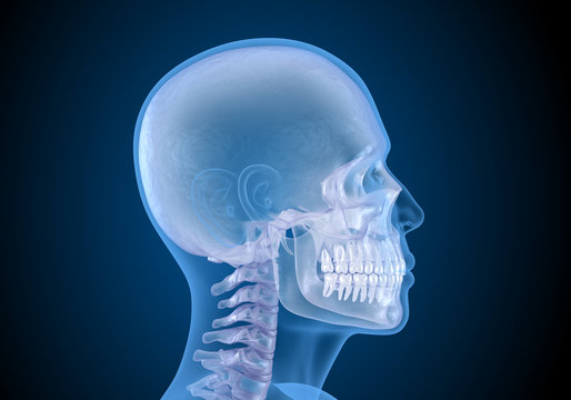 Human head in xray view. Medically accurate 3D illustration