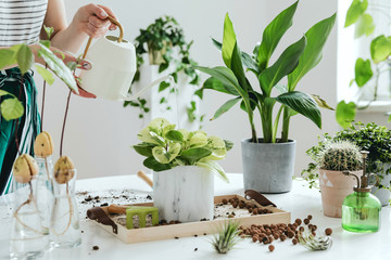 Tuinposter Planten Woman gardeners watering plant in marble ceramic pots on the white wooden table. Concept of home garden. Spring time. Stylish interior with a lot of plants. Taking care of home plants. Template.