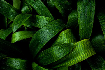 Wall Mural - abstract green texture, nature blue tone background, tropical leaf