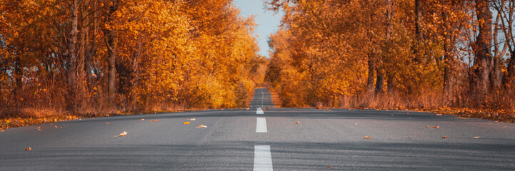 Banner3:1. Empty asphalt road in autumn forest. Autumnal background Wall mural