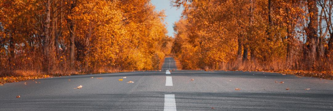Banner3:1. Empty asphalt road in autumn forest. Autumnal background