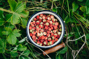 wild strawberries in a bowl