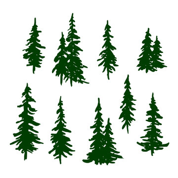 Green pine trees set for Christmas and New Year decoration. Vector