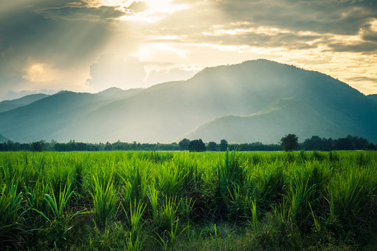 Mountain in sunlight  and sugarcane fild