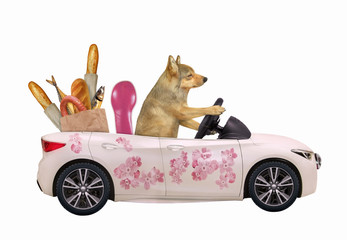 The beige dog drives a car painted with beautiful pink flowers with a grocery bag full of food. White background. Isolated.