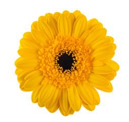In de dag Gerbera Yellow gerbera flower