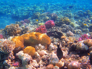 Papiers peints Recifs coralliens coral reef in egypt
