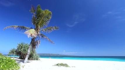 Fototapete - Coconut palm tree on white sandy seashore on tropical island. Travel destinations. Summer vacations