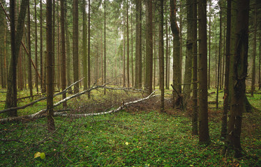 Landscape with fallen tree in the deep northern forest